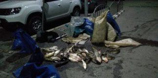 Polițiștii au oprit autoutilitara plină cu peşte şi ustensile de pescuit