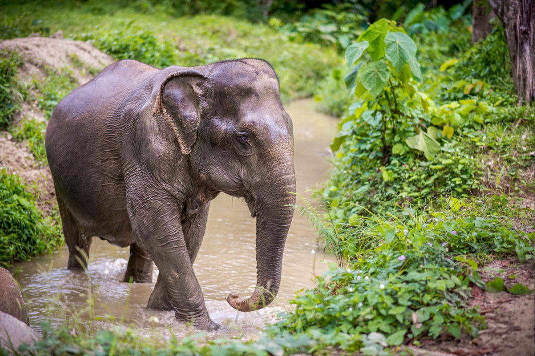 """Elefanții din Thailanda au fost """"eliberați"""" de scaunele grele pentru turiști"""