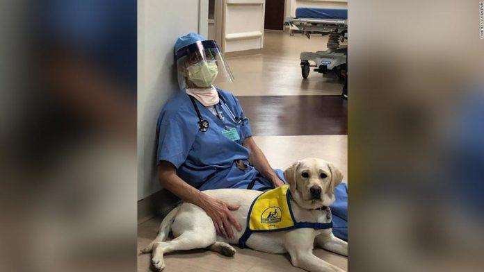 Cățelușa Wynn îi ajută pe medici în prima linie a luptei cu COVID-19