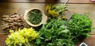 Primăvara își fac apariția o mulțime de plante benefice pentru organism