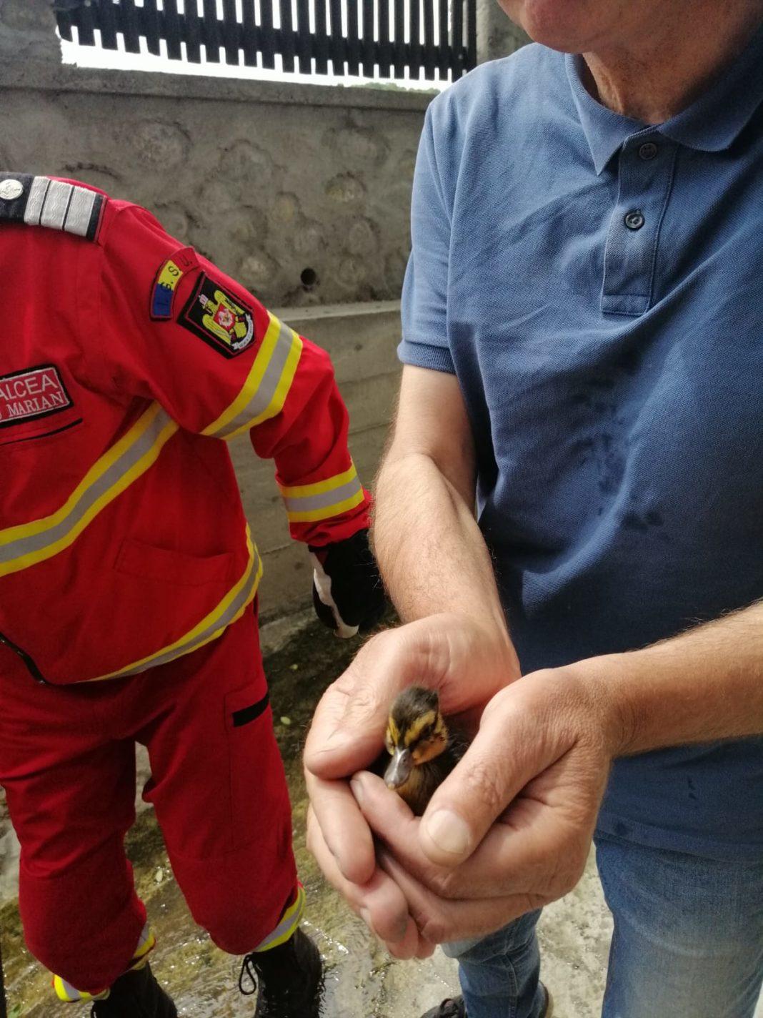 Pompierii militari vâlceani au salvat opt boboci de raţă sălbatică