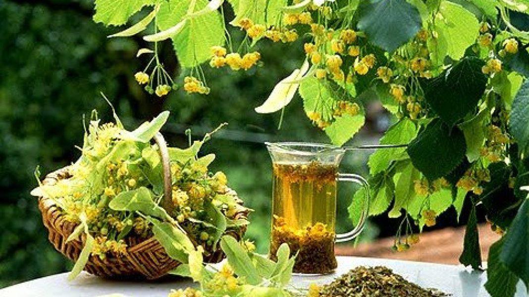 Florile de tei au multe beneficii pentru sănătate