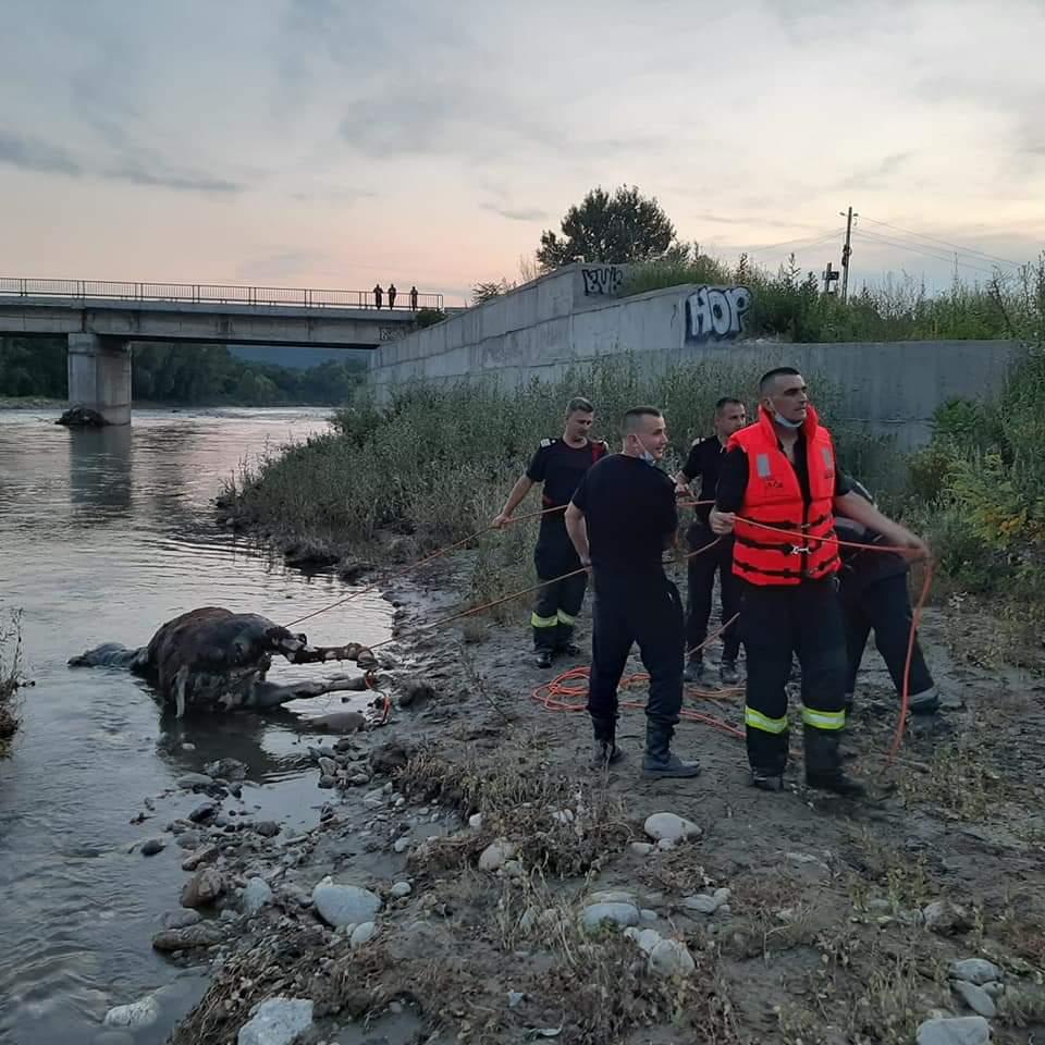 Cadavrul unui cal a fost scos vineri din apele râului Jiu în amonte de municipiu, în zona podului din partea de nord a orașului