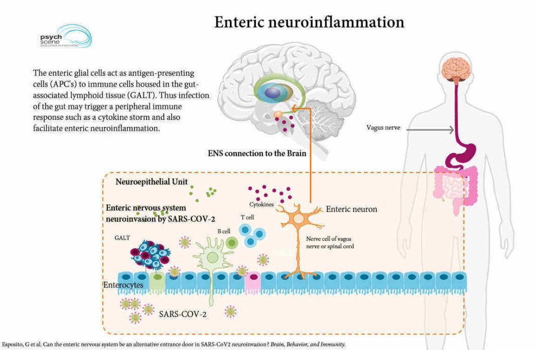 Oamenii de ştiinţă avertizează asupra unui potenţial val de leziuni cerebrale asociate COVID-19