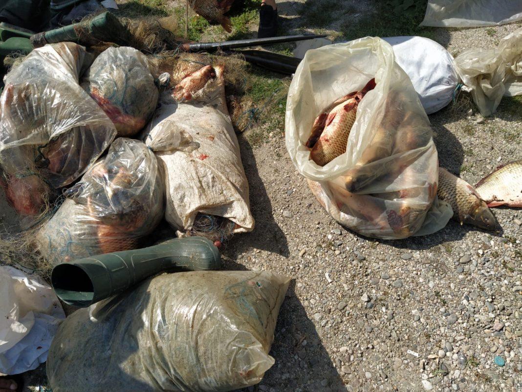 doi bărbați din comuna Ionești, care cu o autoutilitară, transportau pește, fără a deține documente legale de proveniență și transport.