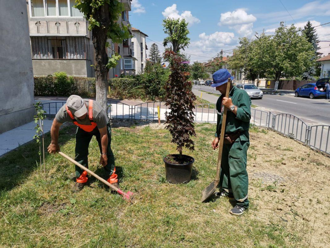 Continuă plantarea de copaci și arbuști pe domeniul public