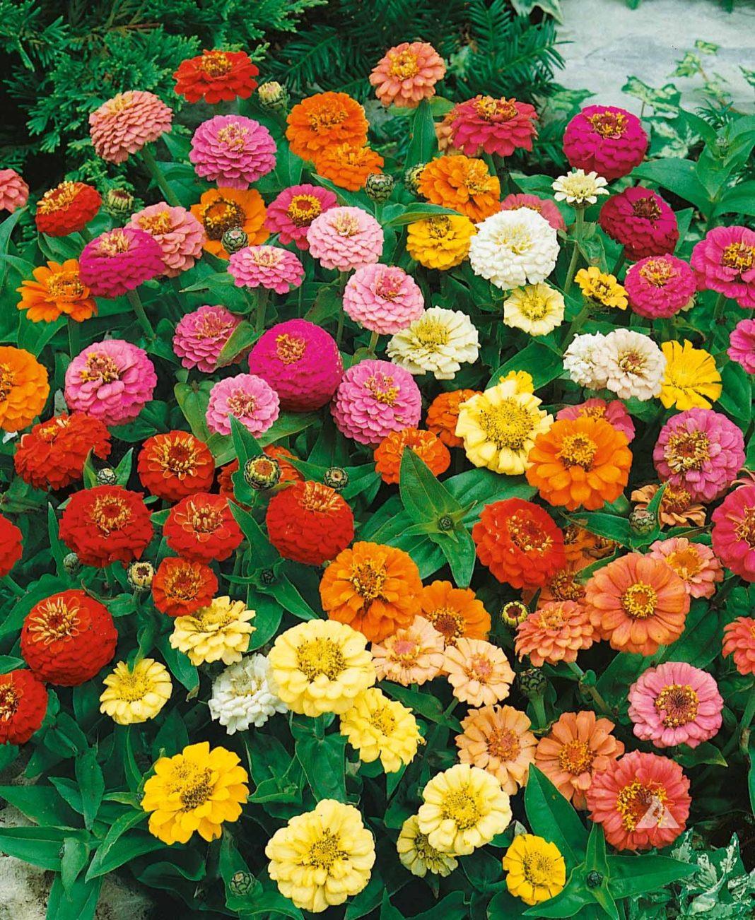 Există flori care înfloresc toată vara