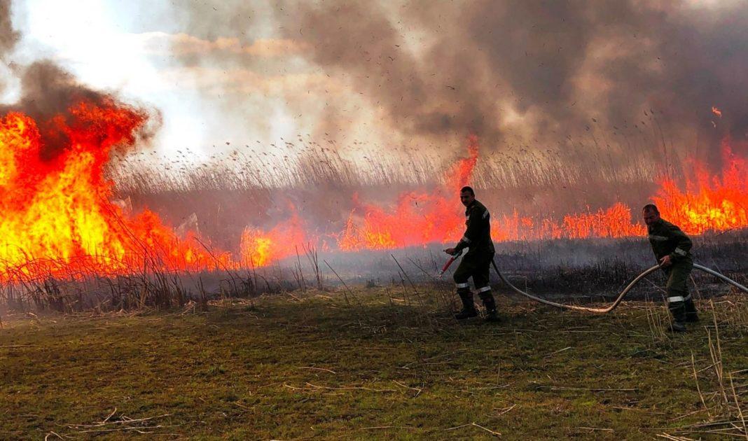 Incendiu de vegetație în București