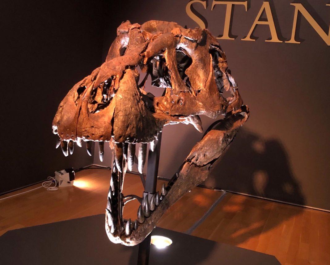 Scheletul unui Tyrannosaurus Rex, scos la licitație
