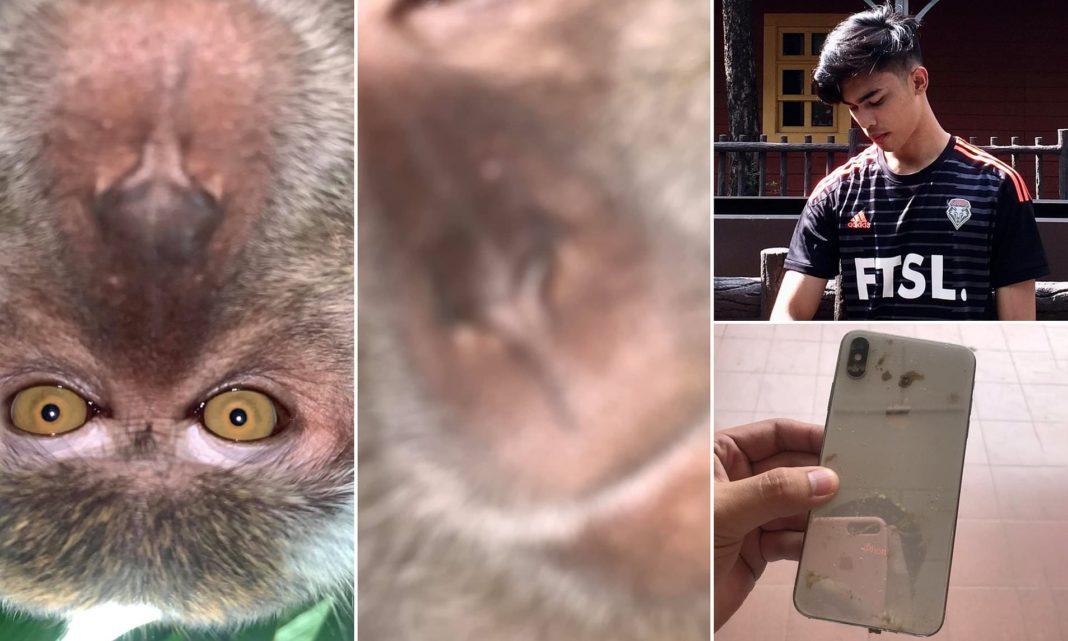 Un tânăr din Malaezia a găsit o serie de selfie-uri cu o maimuță pe telefonul său, după ce primata i-a furat dispozitivul din locuință