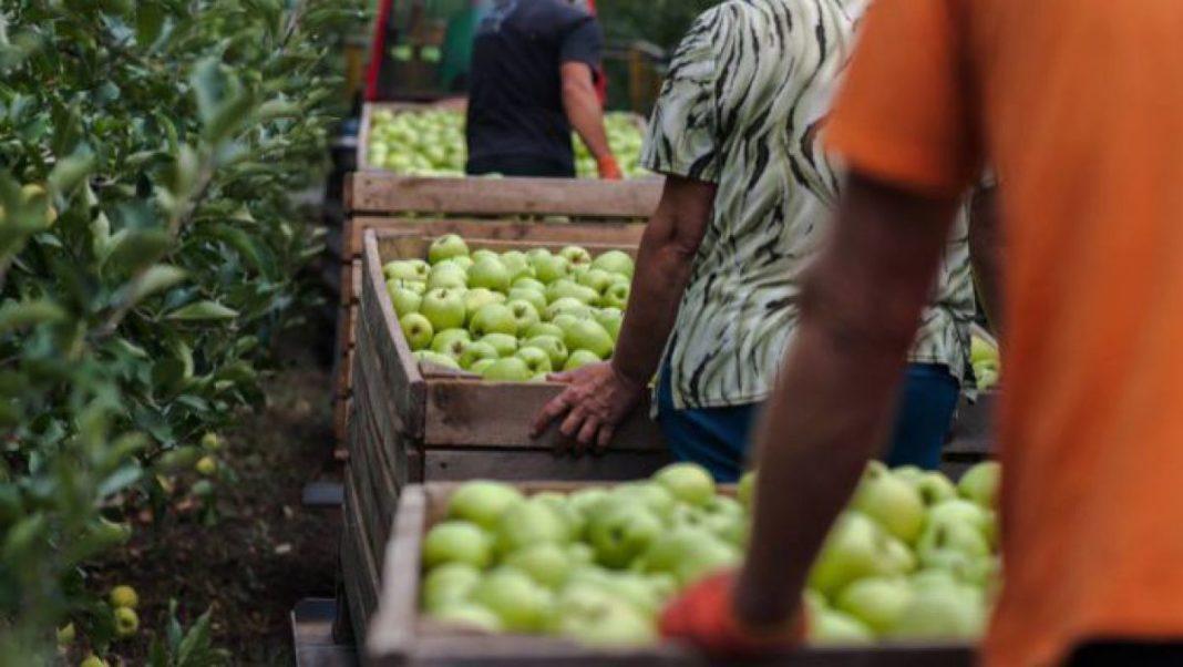 Trei scheme noi de sprijin pentru fermieri, lansate de APIA