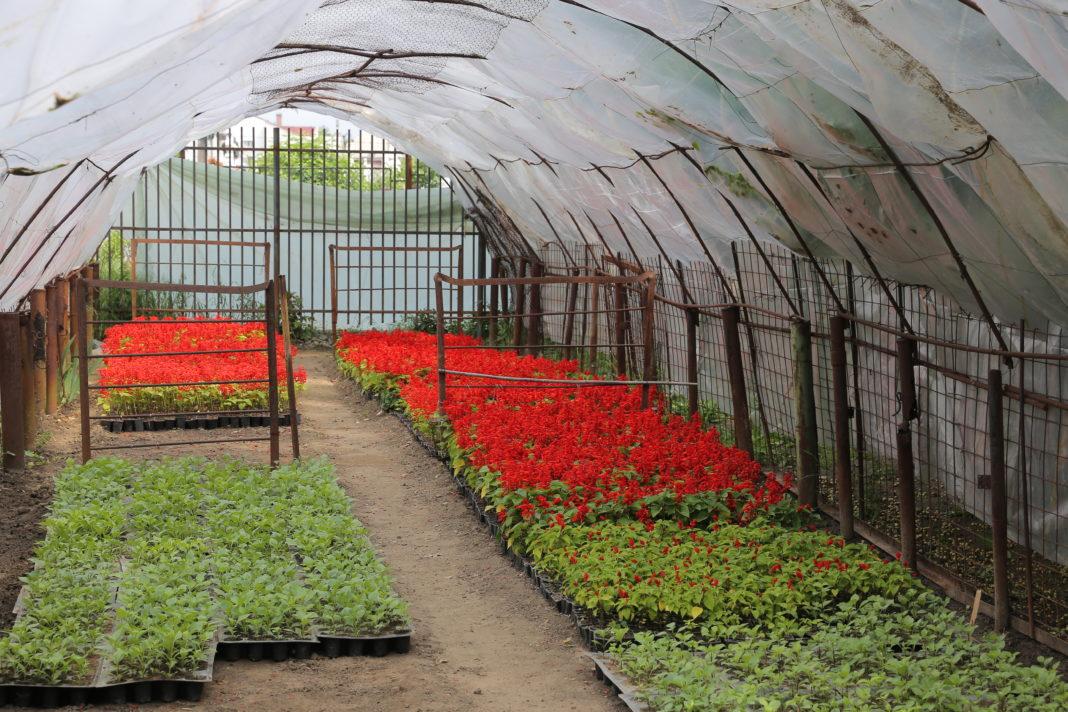 Regia care administrează domeniul public al Craiovei a trecut la achiziţia de flori, arbori şi arbuşti
