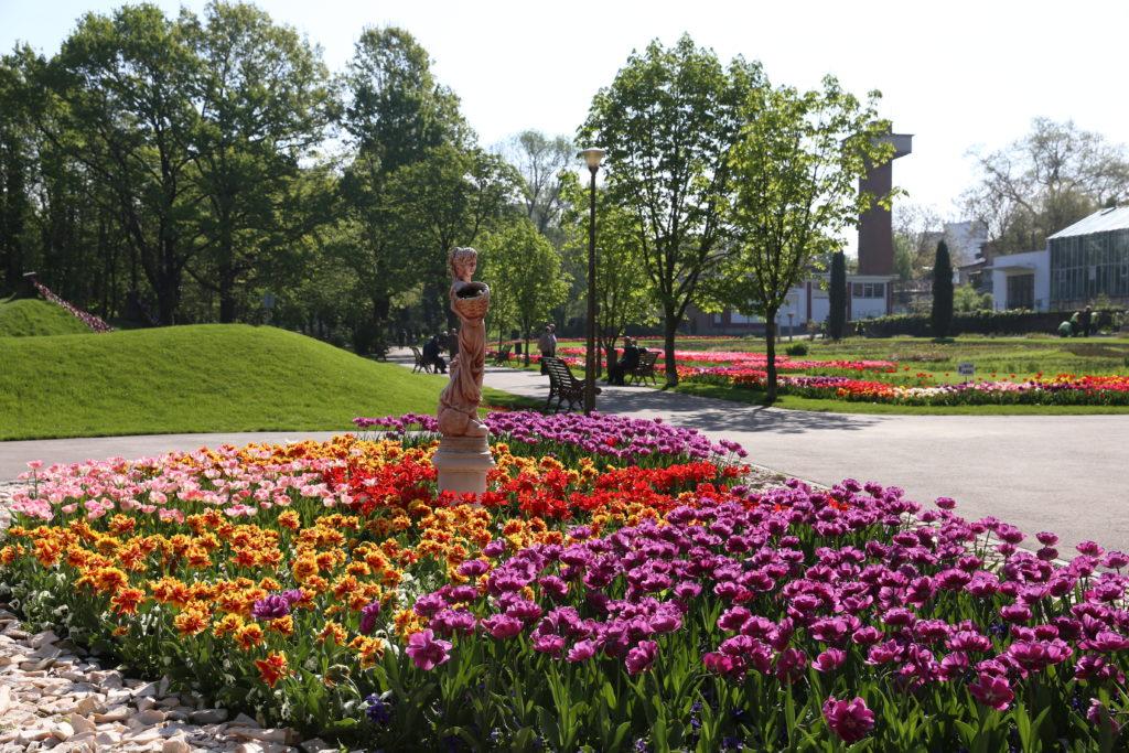 Lalele plantate în Grădina Botanică