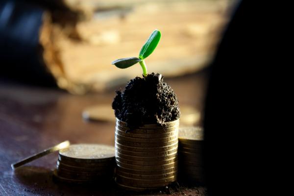 Vești bune pentru fermieri: Încep plățile APIA pentru avansul din 16 octombrie