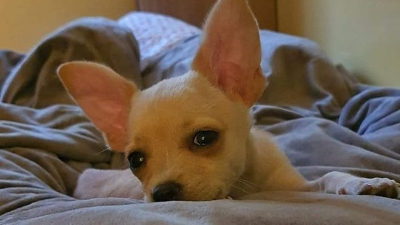 Un câine care urma să fie eutanasiat pentru că avea pașaport fals, salvat după intervenția lui Jean Claude Van Damme