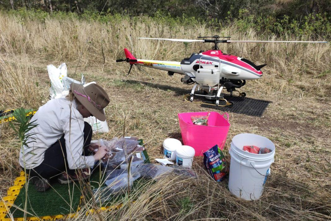 Australia face reîmpăduriri cu dronele ca să salveze urşii koala