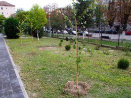 Pieţe Prest Râmnicu Vâlcea a continuat încă de la începutul lunii programul de plantări de arbori și arbuști pe domeniul public