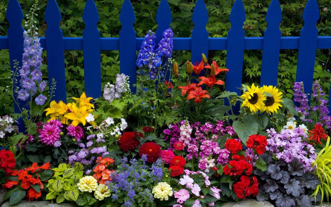 Cum punem la iernat bulbii florilor de vară