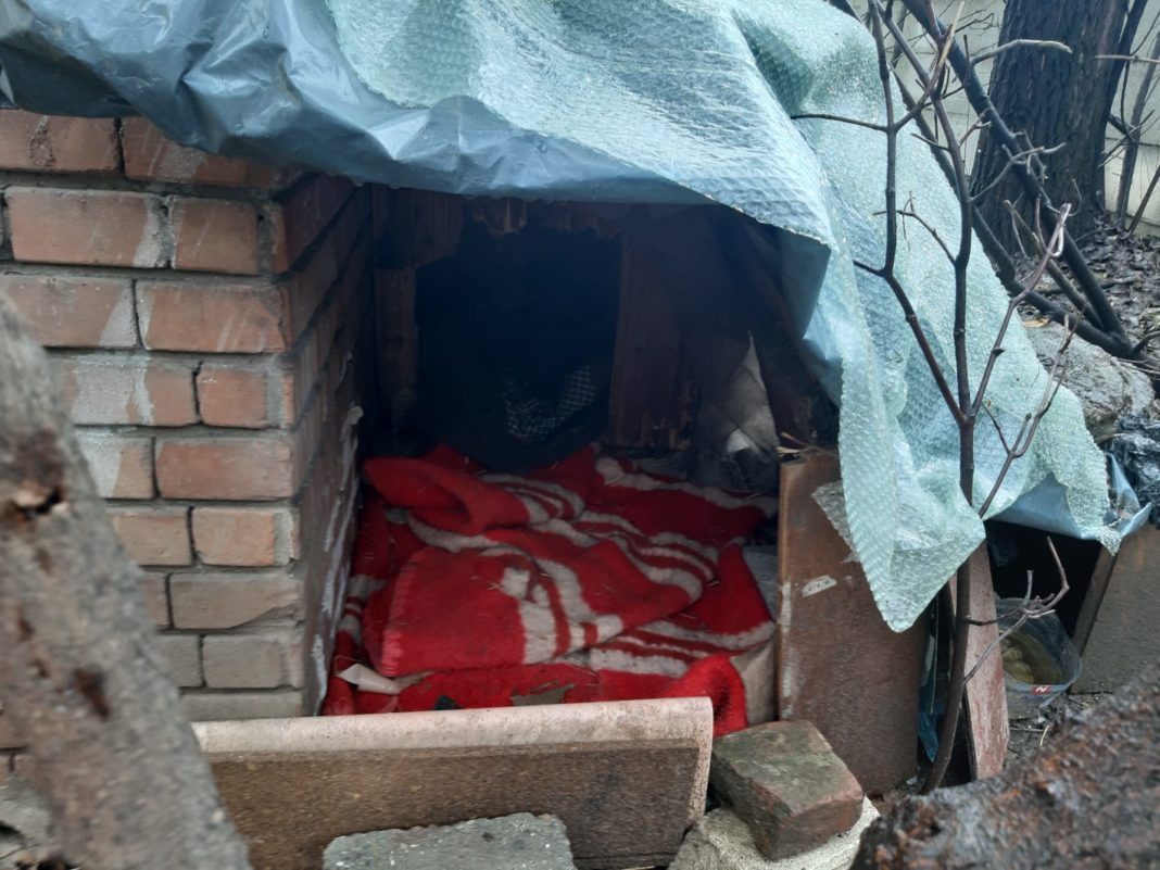 Adăpost improvizat pentru cățeii din curtea spitalului/foto: Claudiu Tudor