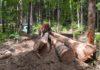 Amenzi uriașe de la Consiliul Concurenței pentru 31 de companii de pe piața lemnului