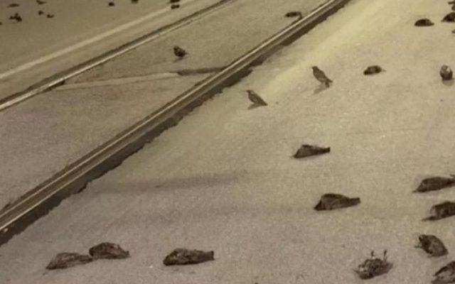 Păsări moarteîn Roma