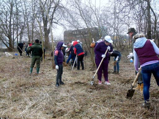 Acțiune de împădurire, la Bucovăț