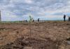 Angajaţi ai Primăriei Bechet şi voluntari nu doar au igienizat zona, ci au plantat sălcâmi pe o suprafaţă de circa 5.000 de metri pătraţi