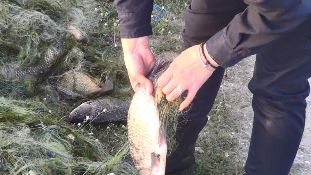 Polițiștii olteni au descoperit un bărbat care încerca să scoată din Olt 3000 metri pătrați de plase de pescuit tip setcă monofilament