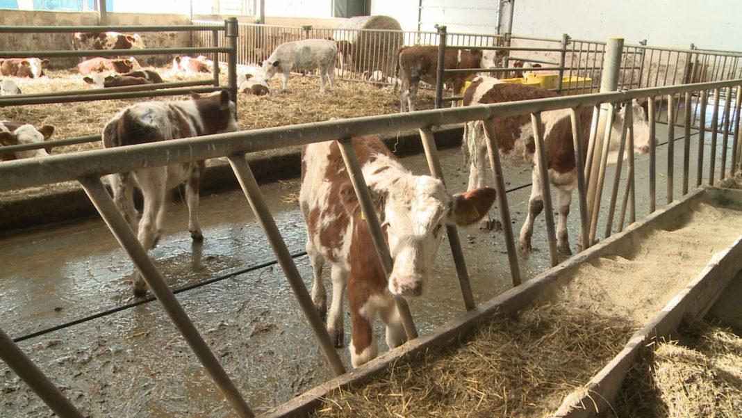 APIA primește cereri de solicitare a ajutorului de stat pentru susținerea activității crescătorilor din sectorul bovin, în anul 2021