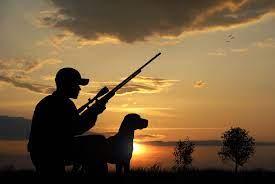 Comisiile din Senat au respins legea vânătorii care ar fi dus la extincția unor specii întregi