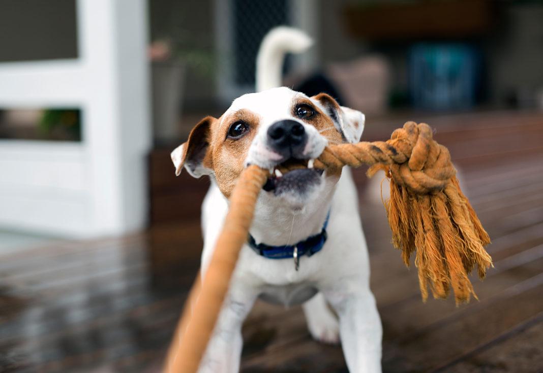 Sfaturi de vacanţă pentru proprietarii de animale de companie