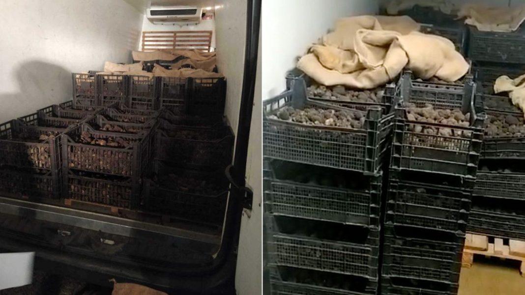 Trufe negre în valoare de 600.000 de lei, confiscate de poliţie